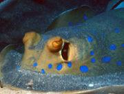 Sharks-Bay-onderwater-180x180